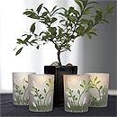Botanical Garden Votive Candle Holders Green and White Wedding Favors