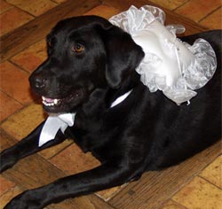 White or Ivory Lace Dog Wedding Ring Bearer Pillow