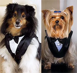 Pet Dog Wedding Tuxedo
