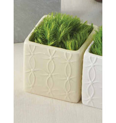 Square Flower Pot 5 Pack
