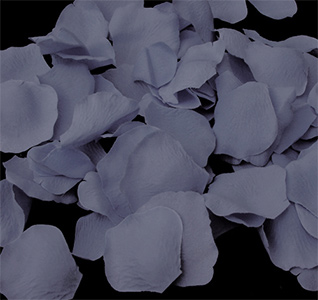 dusty-blue-rose-petals-m.jpg