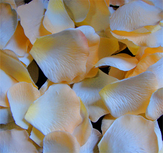 peachy-light-yellow-rose-petals-m.jpg
